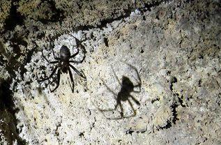 Spinnen im Scheinwerferkegel unserer Helmlampen