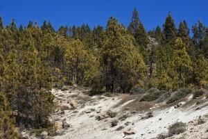 weißer Fels und grüne Kiefernwälder geben einen guten Kontrast