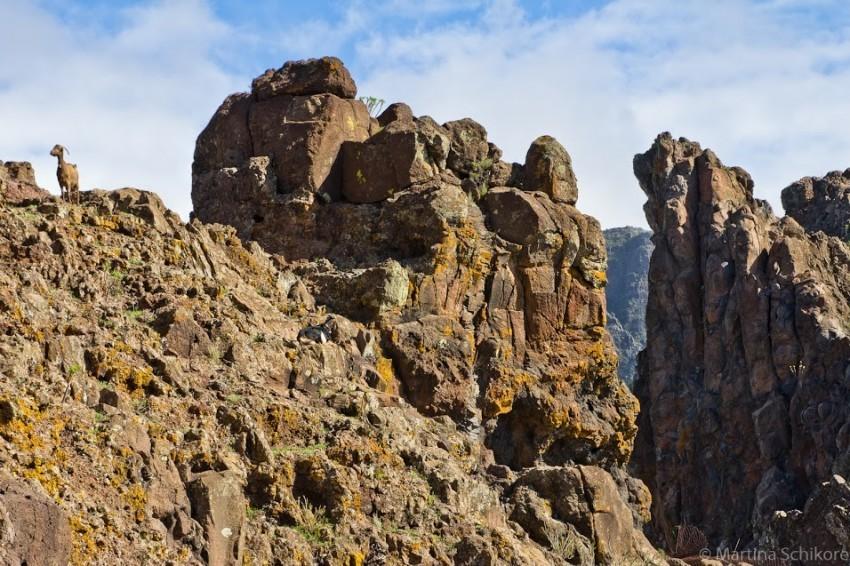Felsen und Ziegen