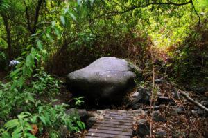 hölzerne Stege und üppige Vegetation