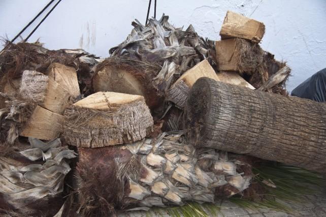 zersägte Palmen - Reste des Sturms