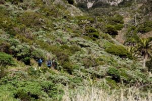"Wandern durch den ""grünen"" Barranco"
