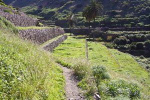 Terrassenfelder bei Vallehermoso - Wanderweg am Barrancorand