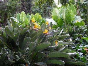 Botani Garten