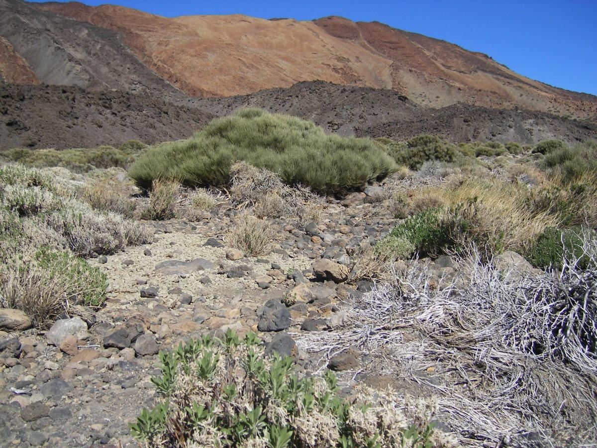 canada blanca Teide1