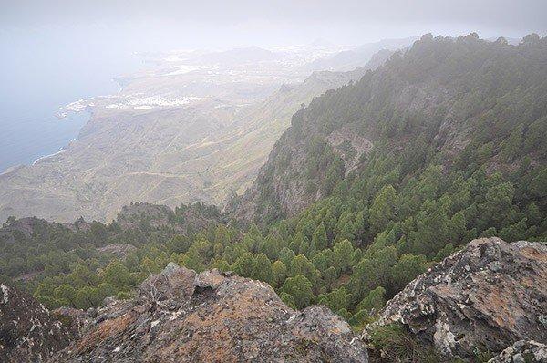 Pinar de Tamadaba