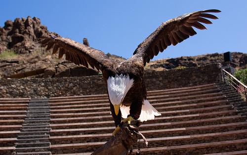 Adler Palomitas
