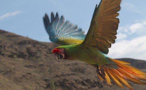 Papagei Palomitos
