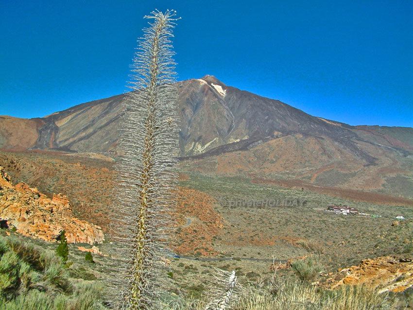 Tajinasten und Teide