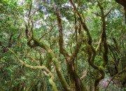 Natur auf El Hierro