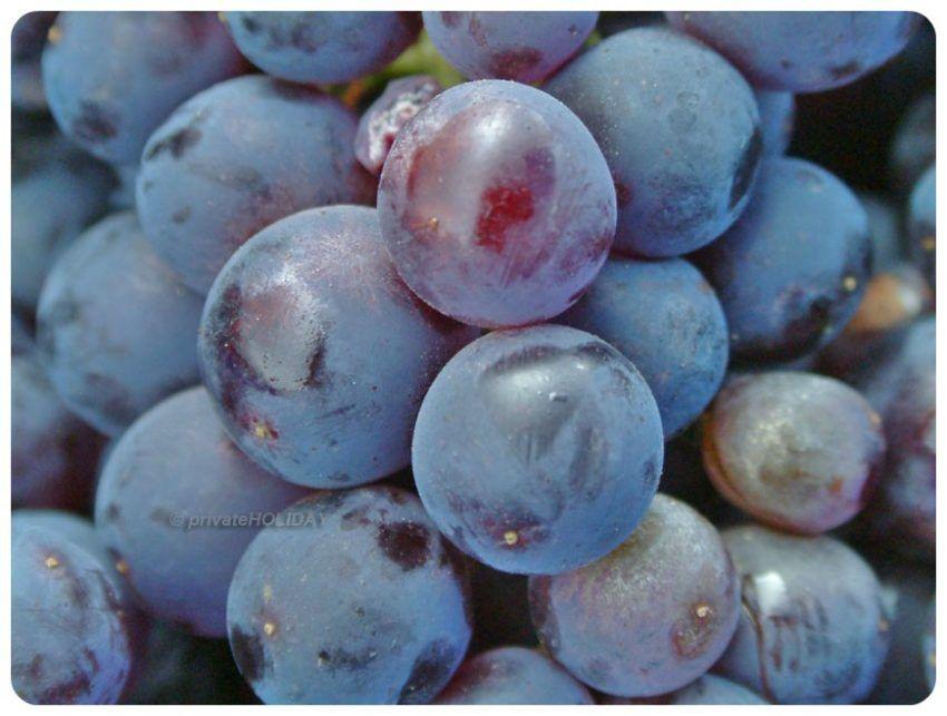 Teilweise wird der Wein nach der Ernte in großen Trögen per Fuß gestampft.