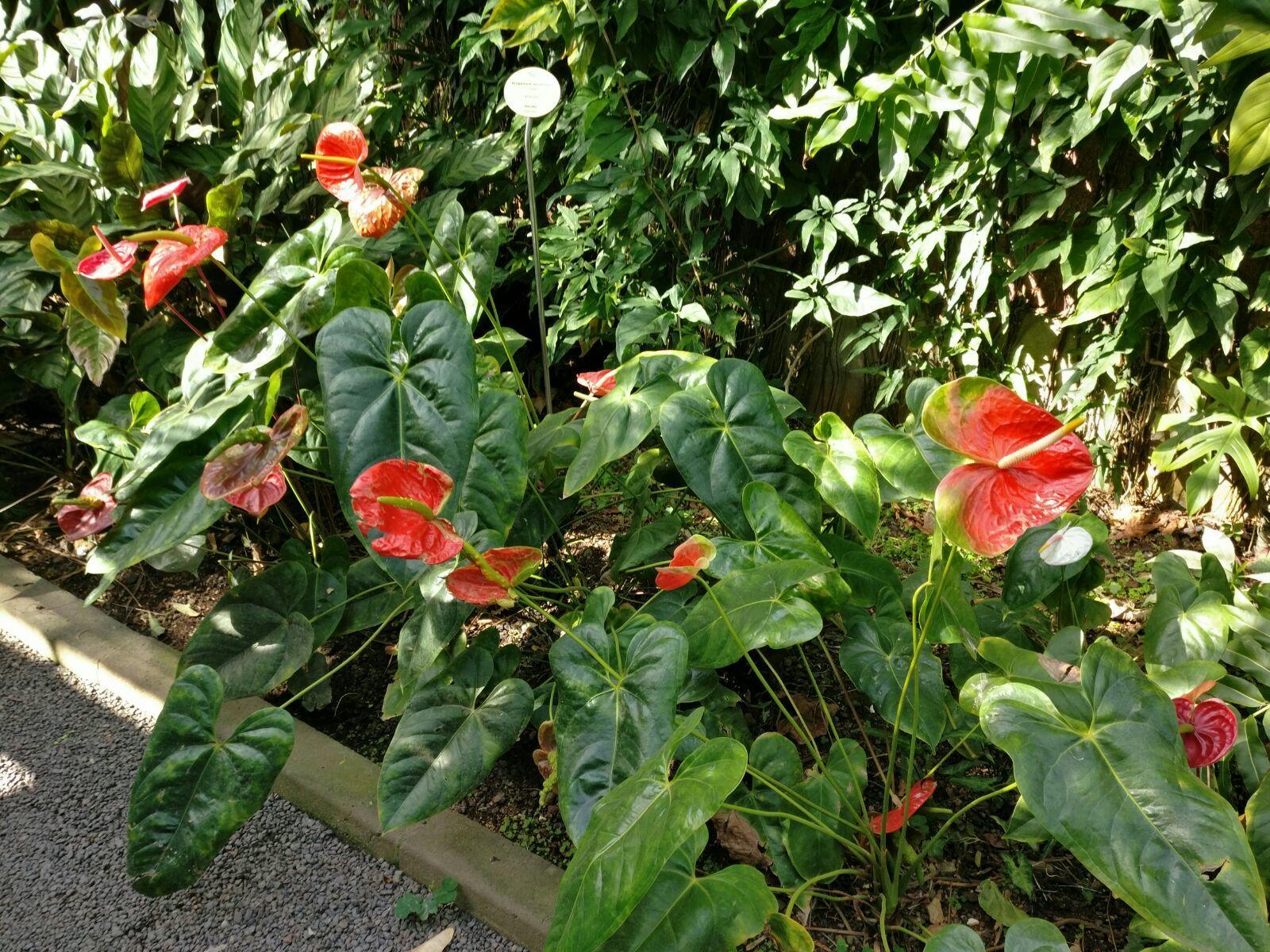 Die bunten Pflanzen
