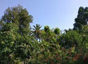 Botanische Garten in Puerto de la Cruz