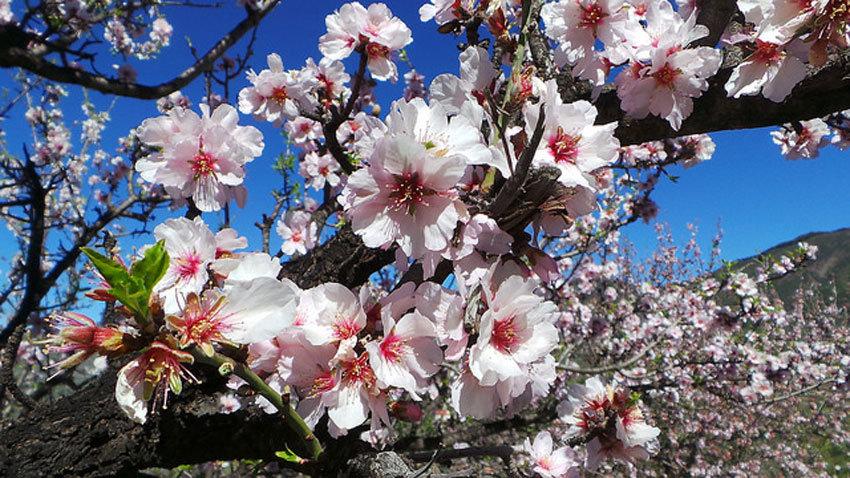 Blüten in voller Pracht