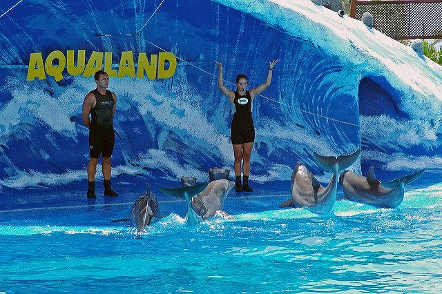 Delfin-Show Aqualand Teneriffa