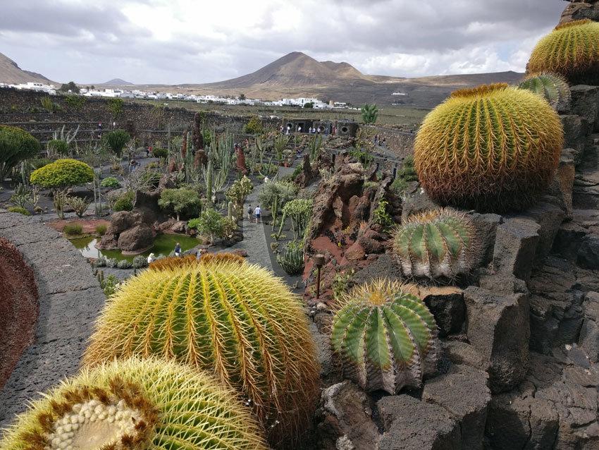Der Jardin de Cactus von Cesar Manrique.