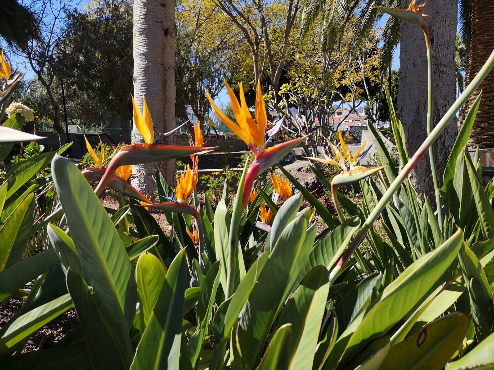Orangene Blumen