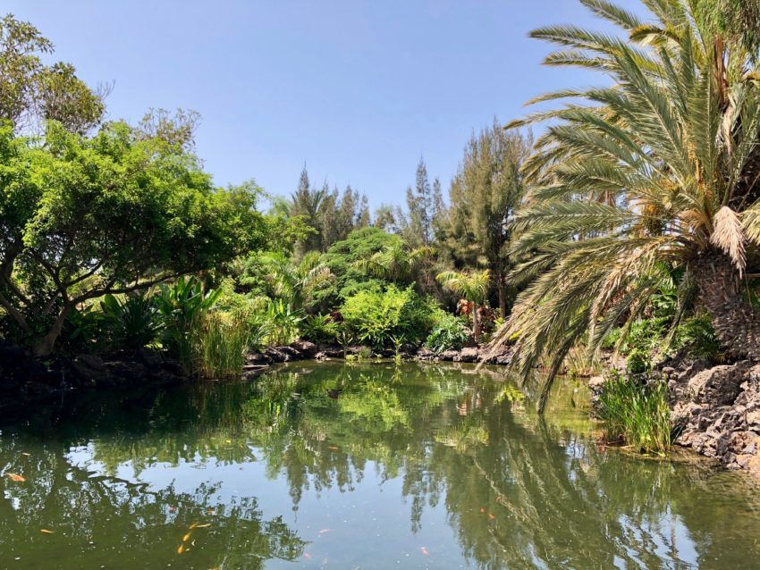 Pflanzen, Park