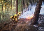 Feuerwehrmänner versuchen den Brand unter Kontrolle zu bekommen