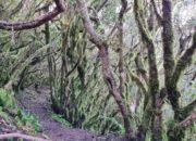 Mystischer Pfad im Nebelwald
